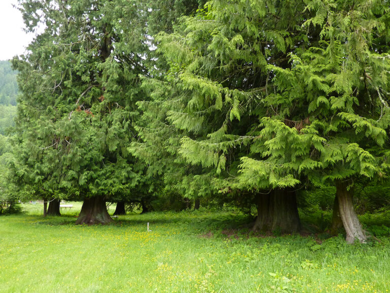 11 acres with pasture, cedar forest, a pond, and lots of wildlife