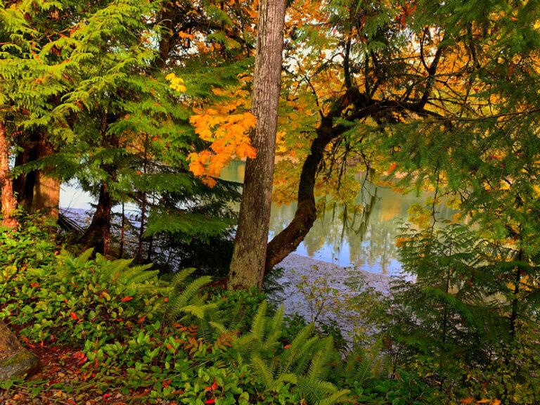 Lush vegetation along the water